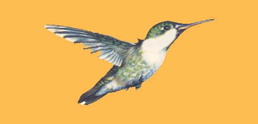 Blue and orange bird logo - photo#7